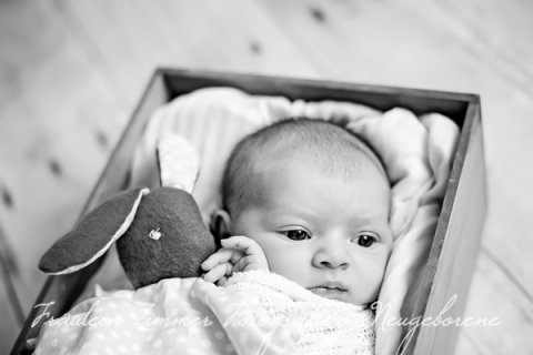 Neugeborenenfotograf_Neugeborenenfotos_Baby_Babyfotos_Babyfotograf Leipzig_Babybilder Leipzig_Babybilder Sachsen_Babyfotograf Sachsen_Homestory Leipzig_Fotograf Leipzig-10